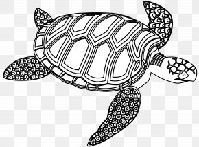 Green Turtle Cliparts - Sea Turtle Black And White Drawing Clip Art PNG