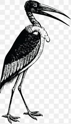 Stork - Bird White Stork IPhone 8 IPhone 7 Plus Clip Art PNG