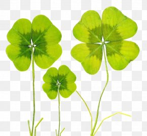 Clover Creative - Four-leaf Clover Baidu Wangpan Biological Specimen PNG