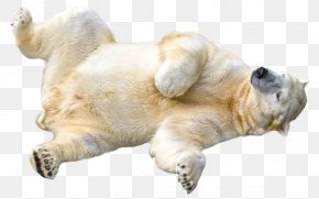 Polar Bear Transparent - Polar Bear Clip Art PNG