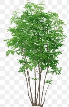 Tree - Tree Plant PNG