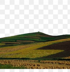 The Farmland On The Hillside - Hill Euclidean Vector Grade PNG