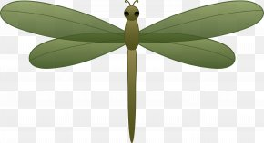 Dragonfly Cliparts - Clip Art PNG