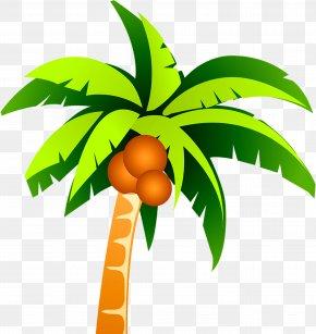 Coconut Tree Vector Material - Coconut Tree Clip Art PNG