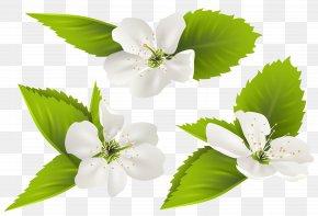 Spring Tree Flowers Clip Art Image - Jasmine Flower PNG