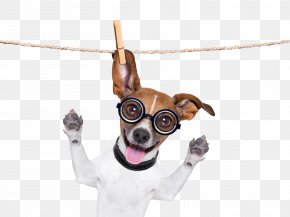 Dry Dog - Pug French Bulldog Basset Hound Jack Russell Terrier PNG