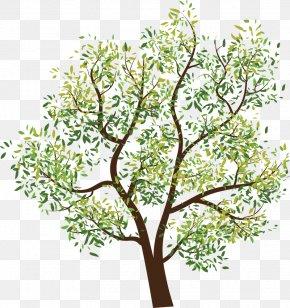 Fir-tree - Tree Clip Art PNG