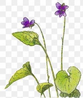 Violet Picture - Violet Clip Art PNG