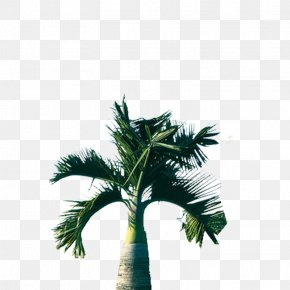Dwarf Palm Tree - Tree Arecaceae Coconut PNG