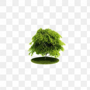 Green Tree - Cinema 4D Wavefront .obj File 3D Computer Graphics Texture Mapping Tree PNG