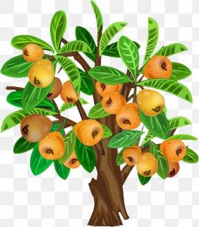 Pear - Fruit Tree Java Apple PNG