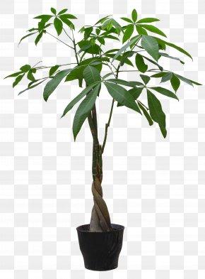 HD Plant Pot - Houseplant Flowerpot Guiana Chestnut PNG