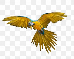 Flying Parrot Images Download - Parrot Bird Macaw PNG