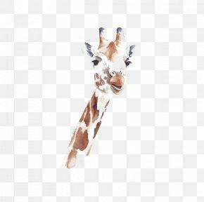 Giraffe - Watercolor: Animals Northern Giraffe Watercolor Painting Drawing PNG