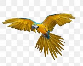 Flying Parrot Images, Free Download - Bird Flight Clip Art PNG