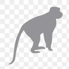 Monkey - Ape Fossil Primates Chimpanzee Monkey PNG