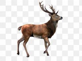 Deer With Transparent Background - Reindeer Moose Clip Art PNG