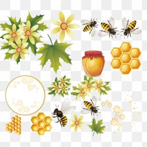 Hand Drawn Bee - Western Honey Bee Beehive Vector Graphics PNG