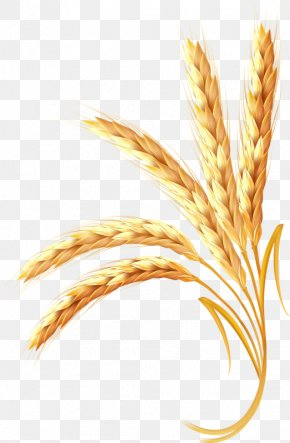 Golden Wheat - Wheat Ear Cereal PNG