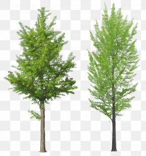 Tree Image - Tree PNG