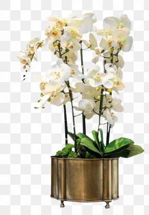 Potted White Orchid Bell - Orchids White Euclidean Vector PNG