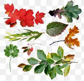 Leaf - Branch Leaf Tree PNG