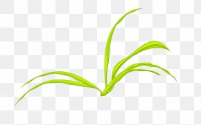 Flower Grass Family - Leaf Grasses Plant Stem Green Font PNG