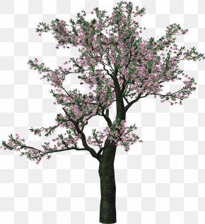 Large Spring Tree Clipart - Tree Clip Art PNG
