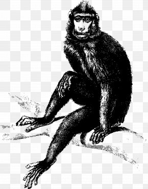 Baboon - Monkey Gorilla Clip Art PNG