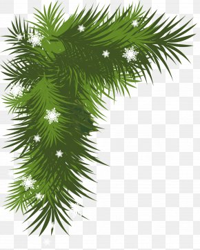Snowy Pine Branch Picture - Christmas Decoration Christmas Tree Clip Art PNG