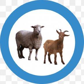 Goat - Goat Sheep Transparency Clip Art PNG