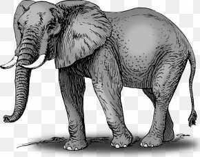 Elephant - African Bush Elephant Asian Elephant World Elephant Day Clip Art PNG