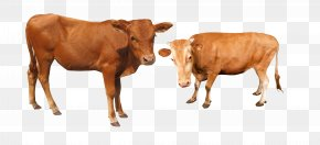 Cattle Cow - Cattle Water Buffalo PNG