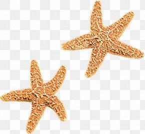 Star Jewellery - Star Cartoon PNG