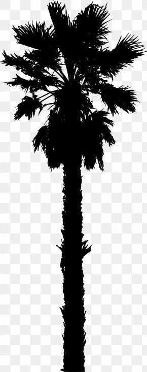 Palm Tree - Arecaceae Date Palm Silhouette Clip Art PNG