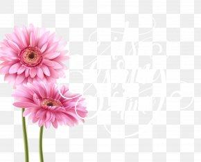 Pink Chrysanthemum Vector - Greeting Card Birthday Teachers Day Illustration PNG