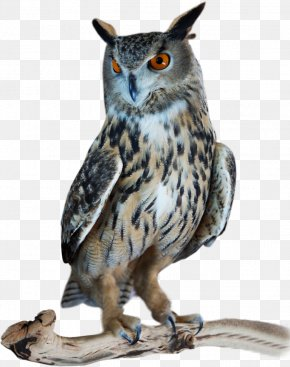 Owl Great Horned - Great Horned Owl Bird Tawny Owl Northern Hawk-owl PNG