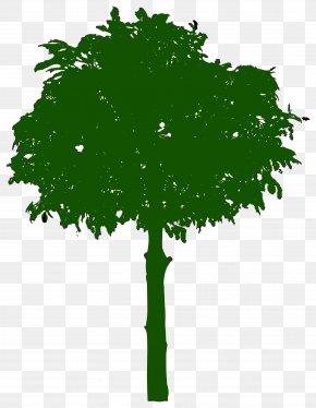 Leaf - Branch Leaf Tree Oak Clip Art PNG