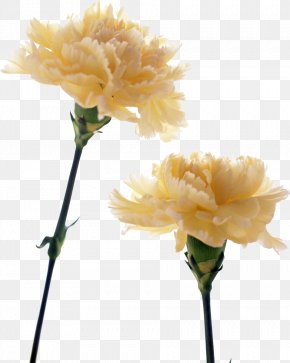 CARNATION - Carnation Birth Flower Yellow Flower Bouquet PNG