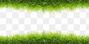 Grass - Wallpaper PNG