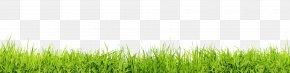 Grass Flat - Lawn Desktop Wallpaper Stock Photography Clip Art PNG