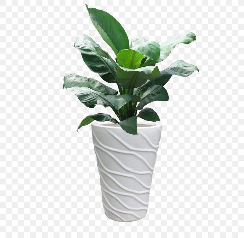 Ho Chi Minh City Ornamental Plant Leaf Areca Palm Peace Lily, PNG, 600x800px, Ho Chi Minh City, Areca Palm, Flower, Flowerpot, Houseplant Download Free