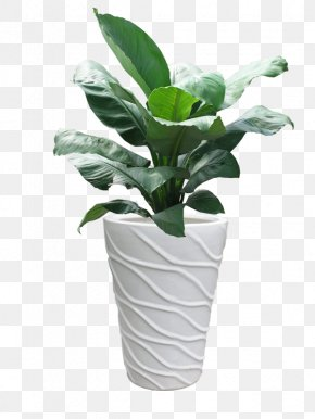 Ho Chi Minh City Ornamental Plant Leaf Areca Palm Peace Lily PNG
