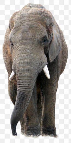 Elephant - Elephant PaintShop Pro PNG