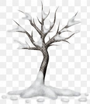 Tree - Tree Branch Woody Plant Twig PNG