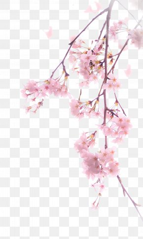 A Cherry Blossom - Cherry Blossom Download Illustration PNG
