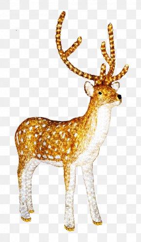 Reindeer - Reindeer Santa Claus Christmas Clip Art PNG