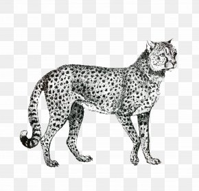 Snow Leopard Small To Mediumsized Cats - Cat Drawing PNG