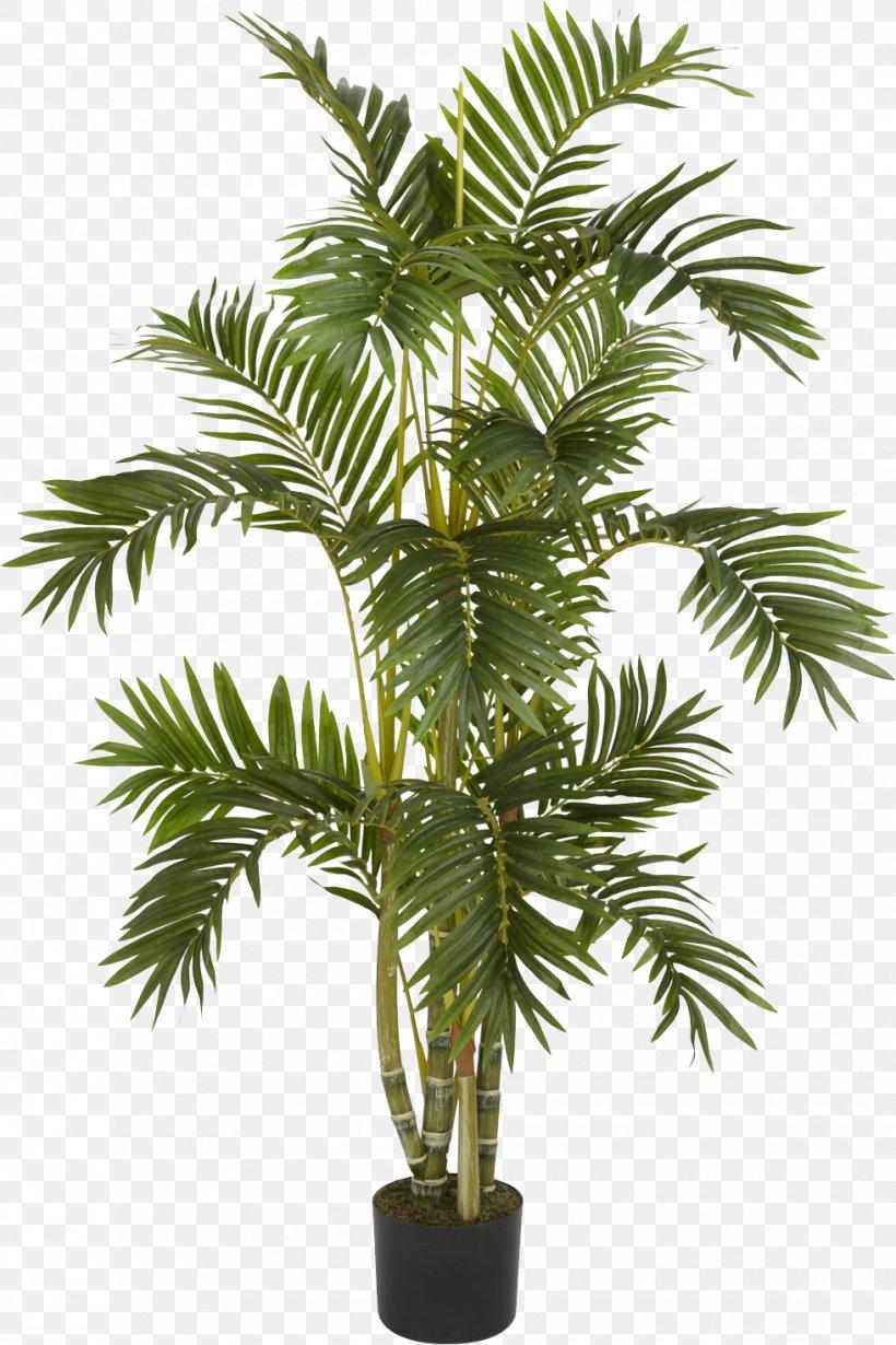 Albizia Julibrissin Weeping Fig Arecaceae Areca Palm Tree, PNG, 980x1471px, Albizia Julibrissin, Areca Nut, Areca Palm, Arecaceae, Arecales Download Free