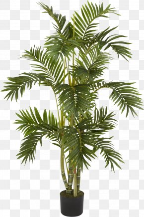Palm Tree - Albizia Julibrissin Weeping Fig Arecaceae Areca Palm Tree PNG